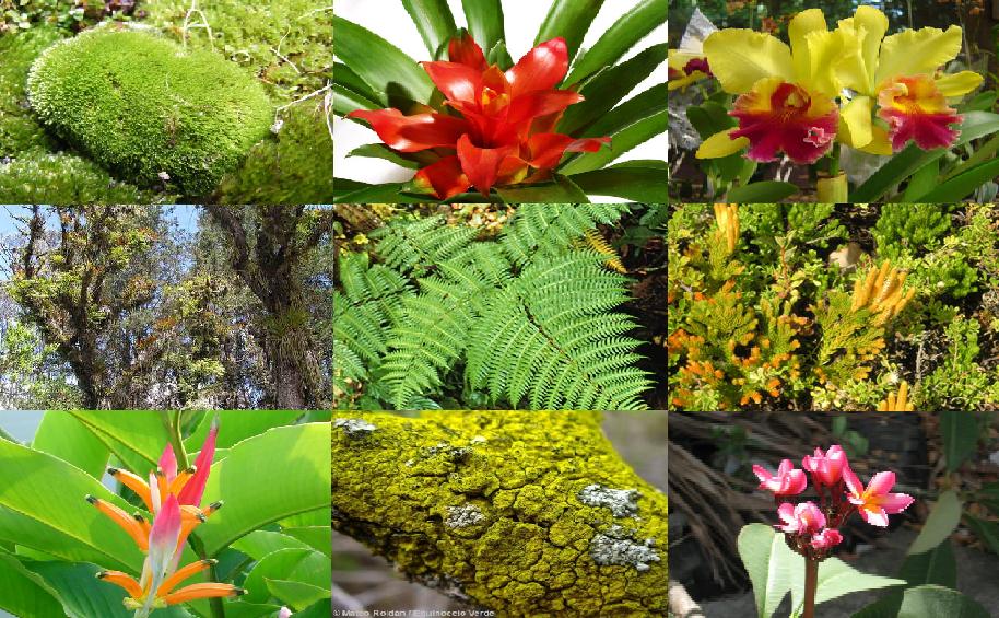 Flora del ecuador primero ecuador for Plantas ornamentales para parques