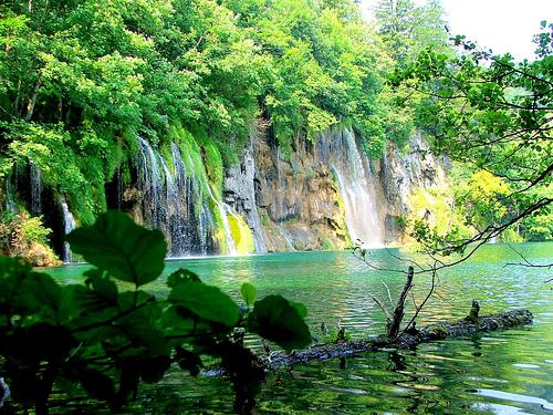 Los bosques for Importancia economica ecologica y ambiental de los viveros forestales