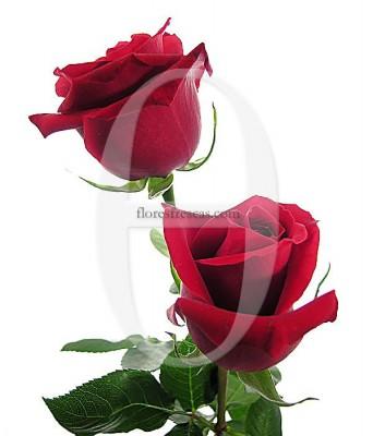 dos-rosas