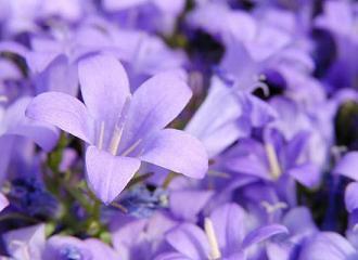fotos-flores-2-peq