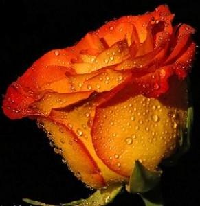 flor-naranja