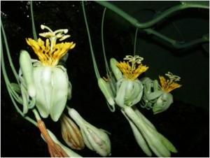 estacion-pedro-franco-flora
