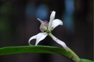 orquideas-jardin-botanica-sto-domingo