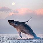 whale_7