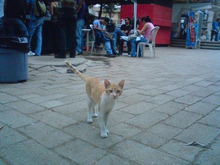 gato hambriento donde la frutanguita