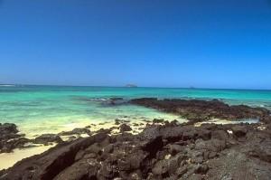 Hermoso Galápagos