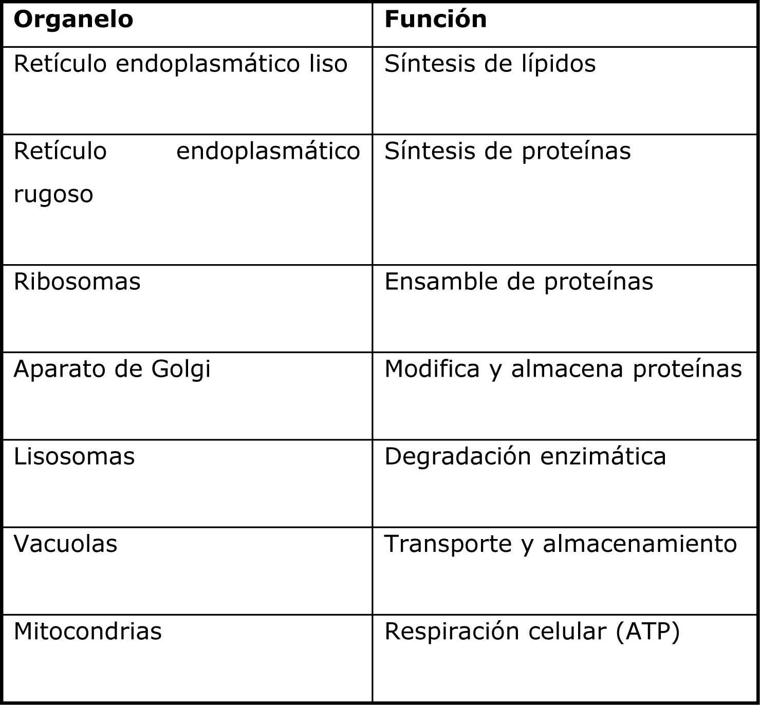 Organelos Celulares Biolog 205 A Mis Apuntes