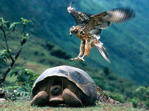 Islas Galapagos Animales