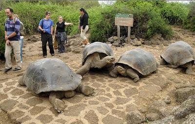 turismo ecuador islas galapagos
