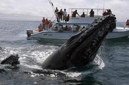 ver ballenas jorobadas tours excursiones viajes