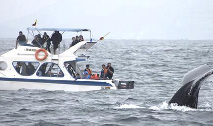 ballenas jorobadas puerto lopez turismo ecuador