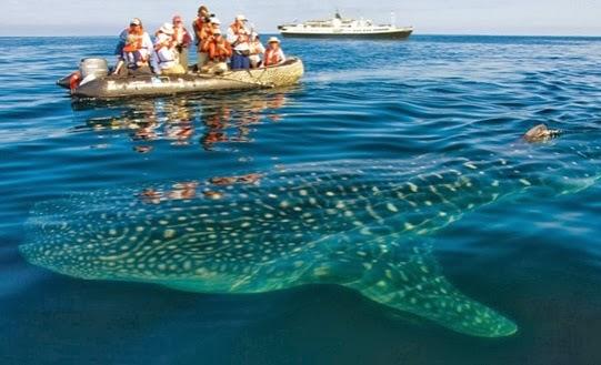 turistas llegan a las islas galapagos