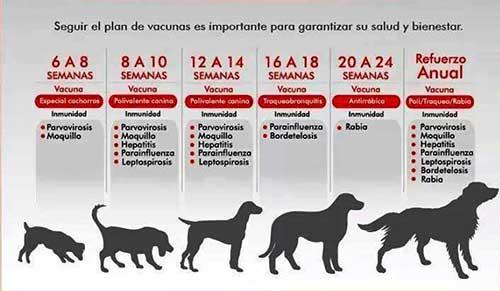 calendario de vacunacion perros