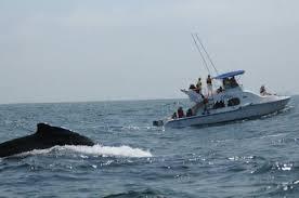 ballenas jorobadas santa clara ecuador turismo
