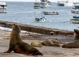 Islas Galápagos reactivarían actividades turísticas el 1 de Julio 2020. Ecuador