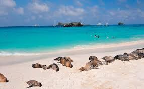 Ecuador busca reactivar el turismo en las Islas Galápagos.