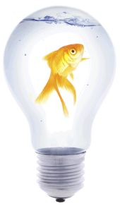 ley de la creatividad