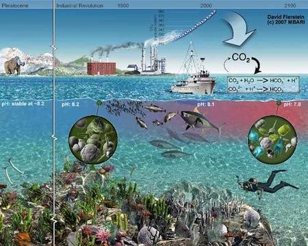 Resultado de imagen de acidificacion del oceano